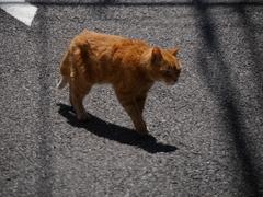 2014.5 猫展~♪15