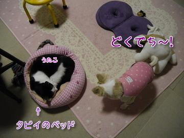 タビイのベッド~♪1