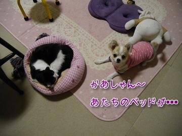 タビイのベッド~♪2