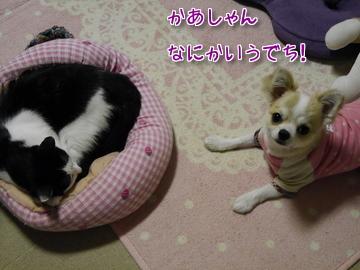 タビイのベッド~♪3