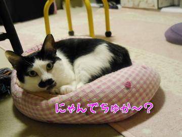 タビイのベッド~♪4