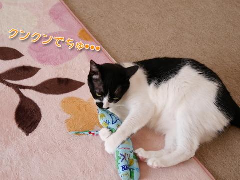 しま汁キッカーまちゅり~♪後編1