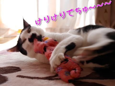 しま汁キッカーまちゅり~♪後編7