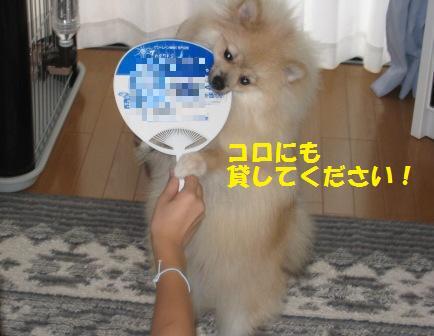 20140805_10.jpg
