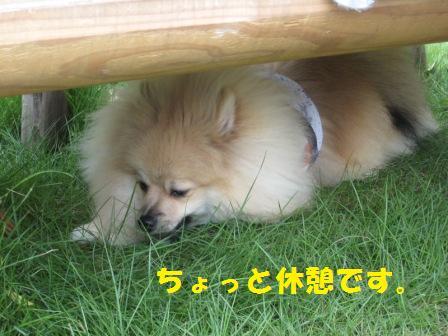 20140812_8.jpg