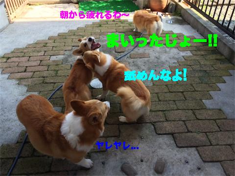 10_20140715095031fdc.jpg