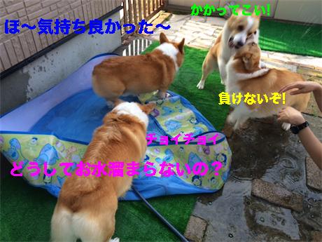 10_20140718093843bc3.jpg