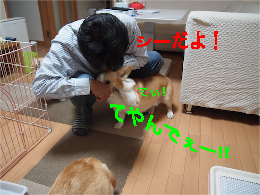 1_20140604105333c3a.jpg