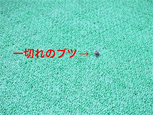 1_20140611093513f68.jpg