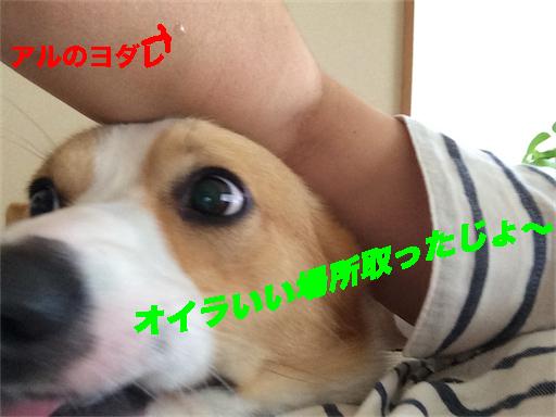 1_201407311300368e2.jpg