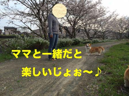2_20140403143244a8f.jpg