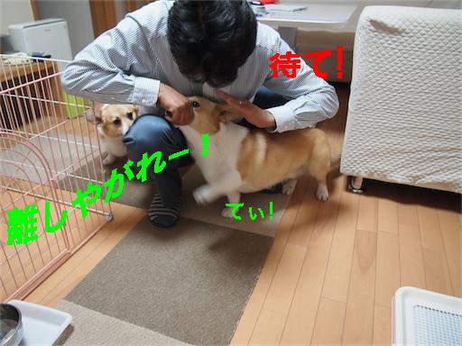2_20140604105334045.jpg