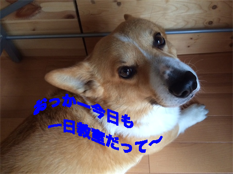 2_20140703211100c84.jpg