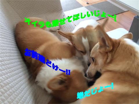 2_201407071852292a1.jpg