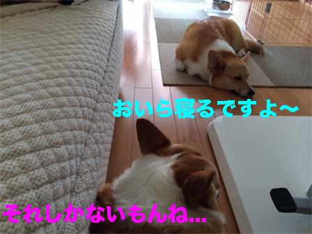 2_20140817150230a9c.jpg