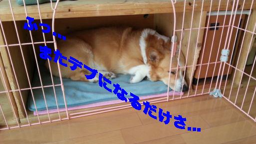 3_20140228134104d73.jpg