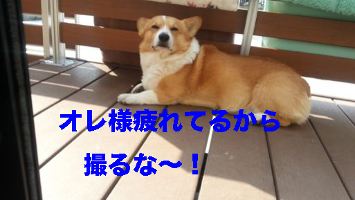 3_20140312182016032.jpg