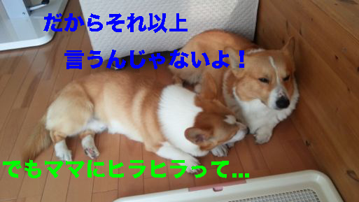 3_20140317143638654.jpg
