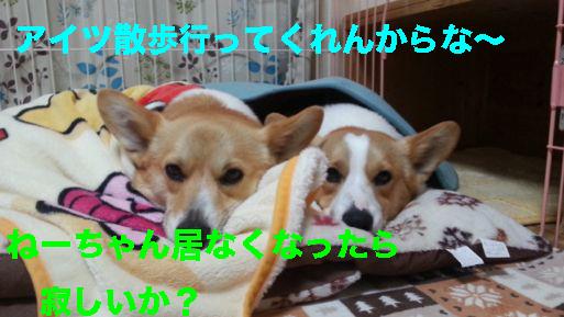 3_20140319120008192.jpg