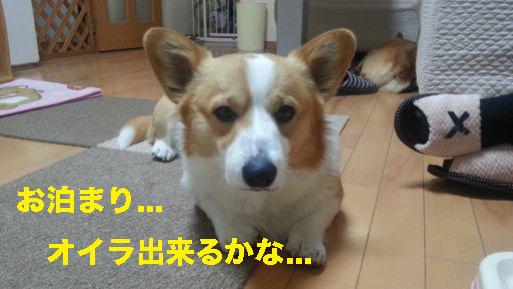 3_201403241238392af.jpg