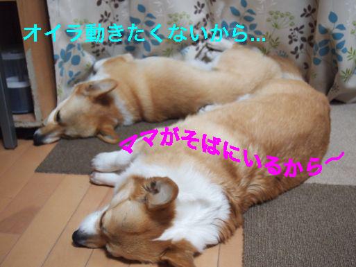 3_20140415135114df1.jpg