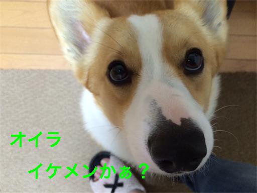 3_20140516202501321.jpg