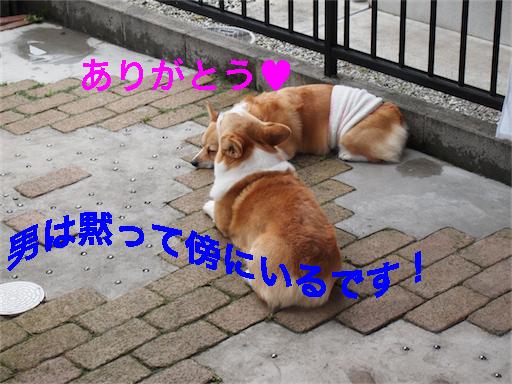 3_201405211345450ca.jpg