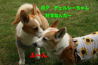 3_2014062815032527f.jpg