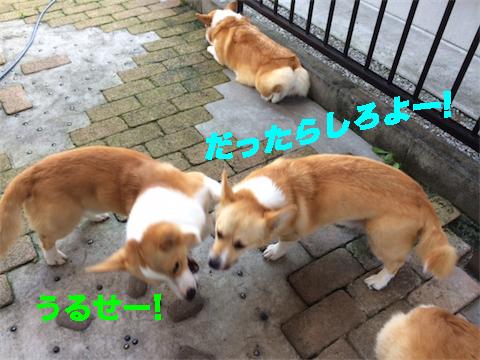 3_20140715094547fb4.jpg