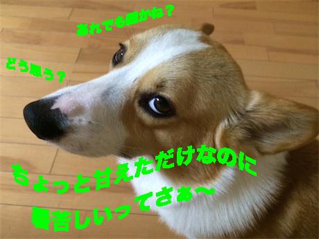 3_20140716085708d56.jpg