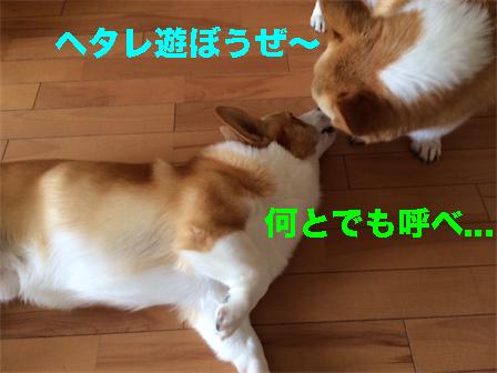 3_20140811131441f4a.jpg