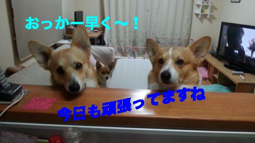 4_201402261047209d8.jpg