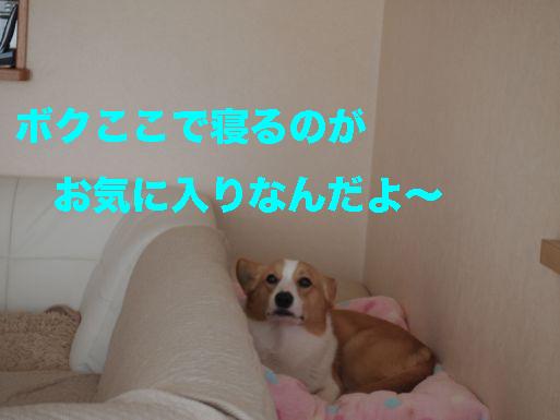 4_20140301141812102.jpg