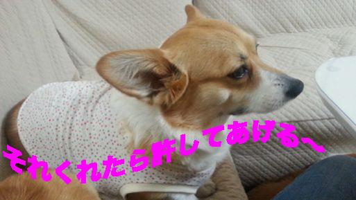 4_201403111601441ff.jpg