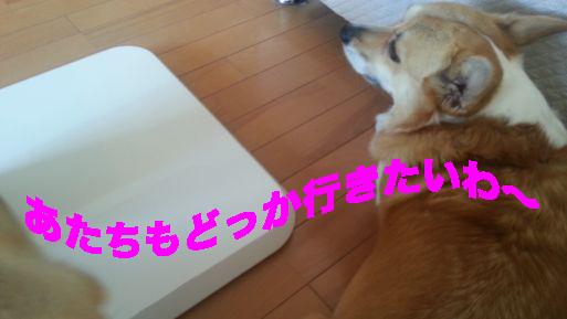 4_20140328144118386.jpg
