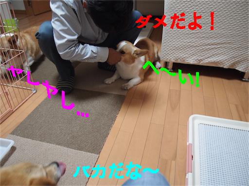 4_201406041053381e8.jpg