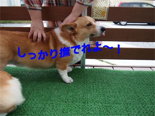 4_20140605094730da6.jpg