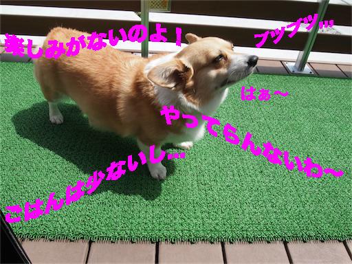 4_201406241257078e5.jpg