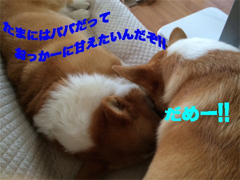 4_20140707185232119.jpg