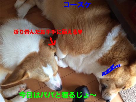 4_201407160857095a3.jpg