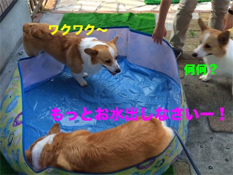 4_20140718093243338.jpg
