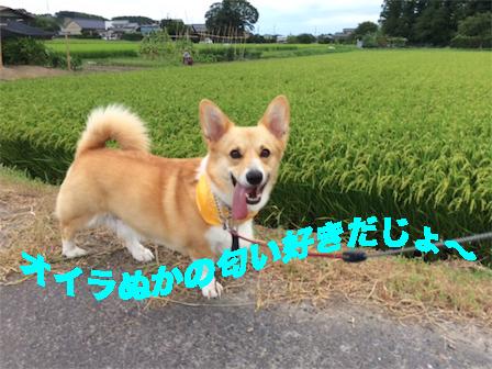 4_20140804101926d98.jpg