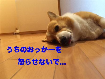 4_20140808092237ee4.jpg
