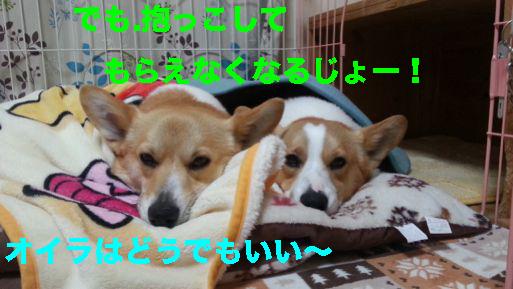 5_20140319120010281.jpg