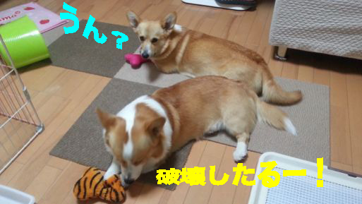 6_20140326150440c58.jpg
