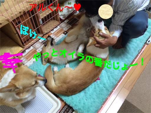 6_201405261345478b4.jpg