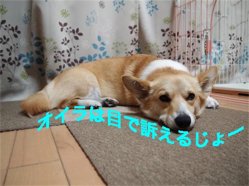 6_20140604110059db6.jpg