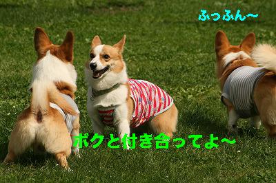 6_201406281509025d1.jpg