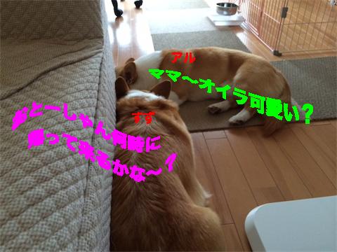 6_20140707190021c75.jpg