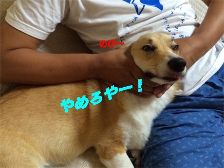 6_201407221252188da.jpg